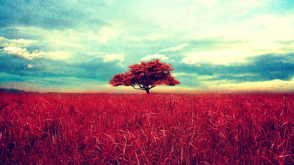 Скачать бесплатно картинки природа