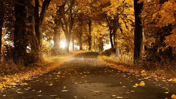 Осень, природа, листва, ветер, погода, лес, заставки