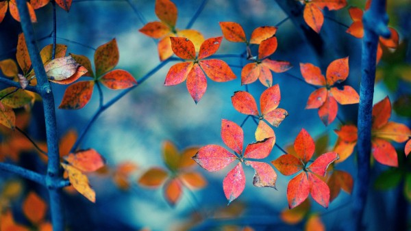 Осень, оранжевые листья, фоны, картинки, природа