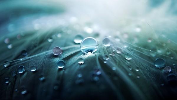 Капли воды на листве макро обои на рабочий стол