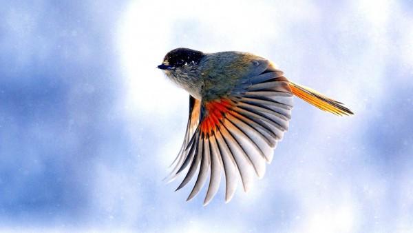 Фото полета птиц