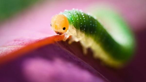 Гусеница макро фото