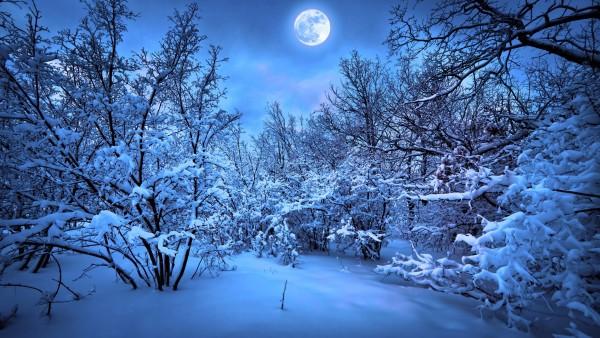 Голубая луна, снег, ночь, лес, зима, сказка, картинки, скачать