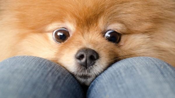 Милая собачка широкоформатные обои hd