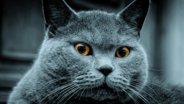 Грозный кот скачать заставки на рабочий стол