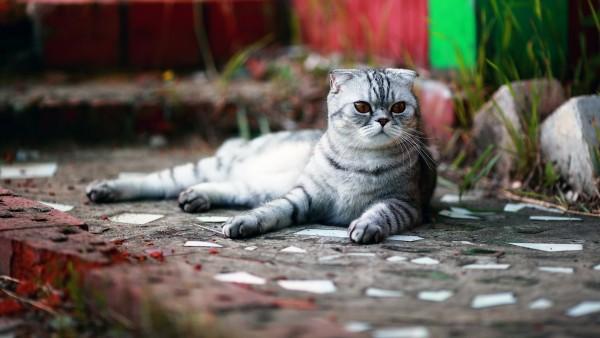 Смешной кот картинки скачать