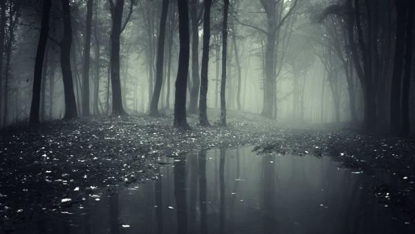 Темный лес природа картинки на рабочий стол скачать