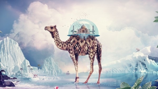 Camel india paradise wallpapers high resolution