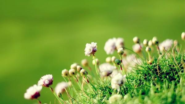 Зеленая долина цветочки обои hd