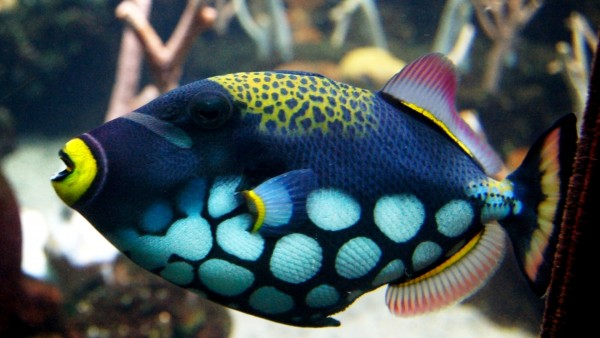 Морские рыбки фотообои