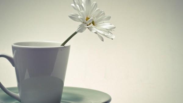 Чашка с белым цветком обои hd