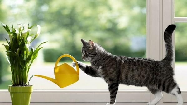 Кот поливает цветы