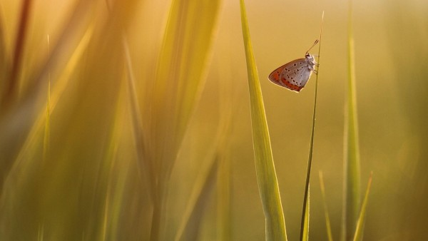 Бабочка на траве картинки на рабочий стол