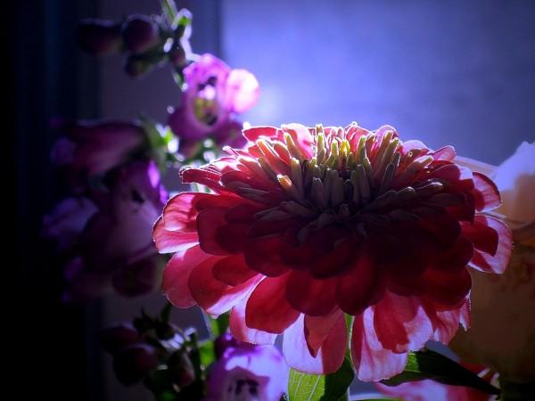 Цветы картинки на рабочий стол