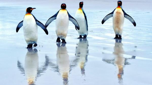 Прикольные пингвины заставки на рабочий стол hd