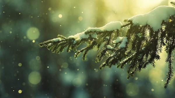 Зима заставки на рабочий стол hd