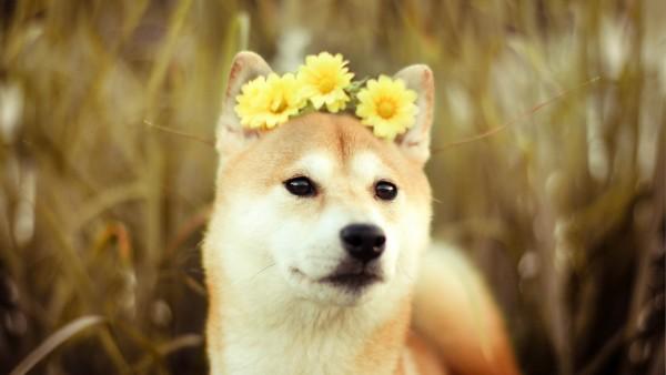 Симпотичная мордашка рыжей собаки