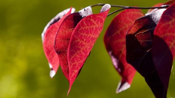 Красота обыкновенного листа