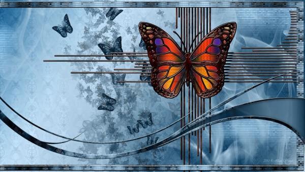 Бабочки картинки для рабочего стола скачать