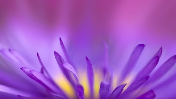 Фиолетовое пламя цветок макро картинки для рабочего стола