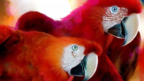 Красные попугаи картинки для рабочего стола скачать