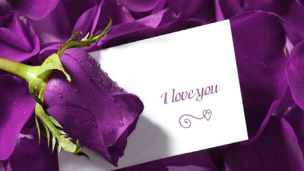 HD обои романтическая открытка I love you на фоне пурпурных роз