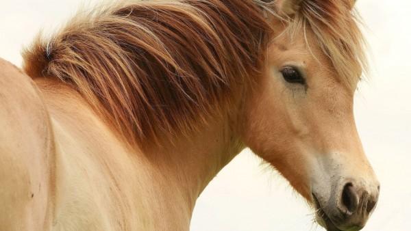 HD обои Лошадь с добрыми глазами