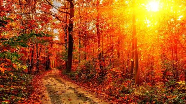 Снимок на котором дорога проложенная через осенний лес