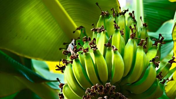 Фото вкусных плодов