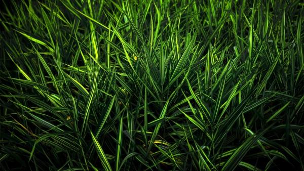 Макро фото темно зеленой травы