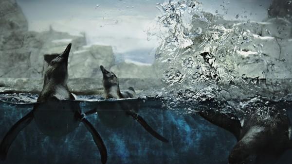 Подводный мир, тюлени, HD обои, скачать