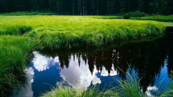 Фото спокойной реки расположившейся в красивом лесу