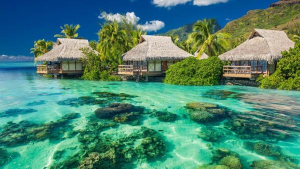 Тропики, пальмы, океан, отдых, берег, фоны, заставки