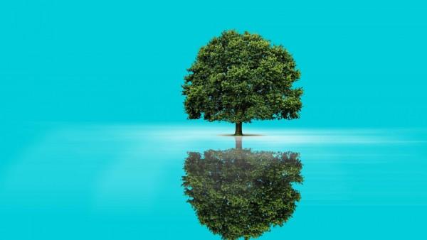 дерево, отражение, фоны, заставки