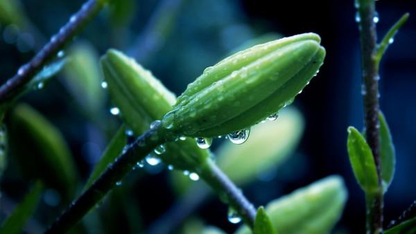 Цветы, макро, трава, капли воды, фоны, заставки, роса