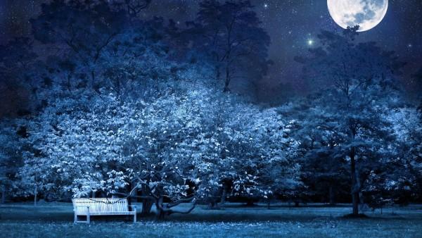 Ночь, скамейка в парке, деревья, звезды, полная луна, небо, тьма, фоны, заставки