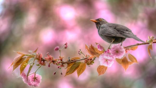 Весенние цветы, птица на дереве обои hd бесплатно высокого качества