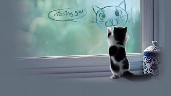 Я скучаю котик шкрябает по стеклу обои hd бесплатно