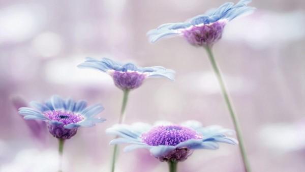 Цветы, макро, стебли, сиреневые, картинки, обои hd, бесплатно