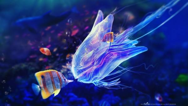 Рыбка и медуза фото