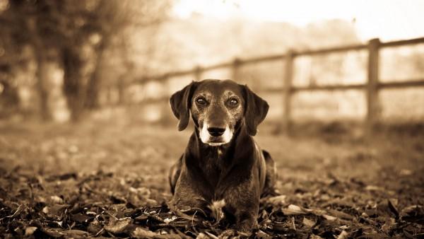 Грустная собачка с милой мордочкой обои hd бесплатно