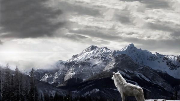 Белый волк, горы, небо, обои hd, бесплатно