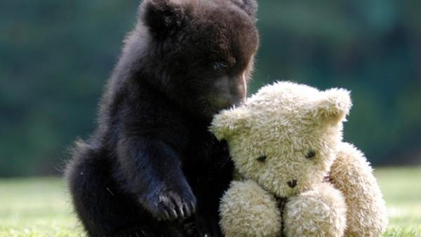 Маленький медвежонок нашел друга плюшевого мишку обои