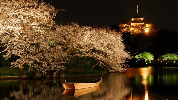 Озеро, лодка, деревья вишни, башни, ночные огни, пейзаж, обои, картинки