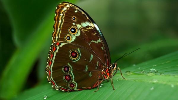 Широкоформатное макрофото хрупкой бабочки