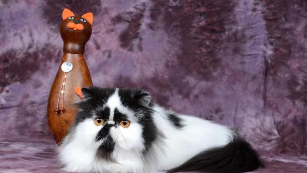 Персидский кот, статуэтка, кот, пятнистый, смешной, большой, картинки, фоны