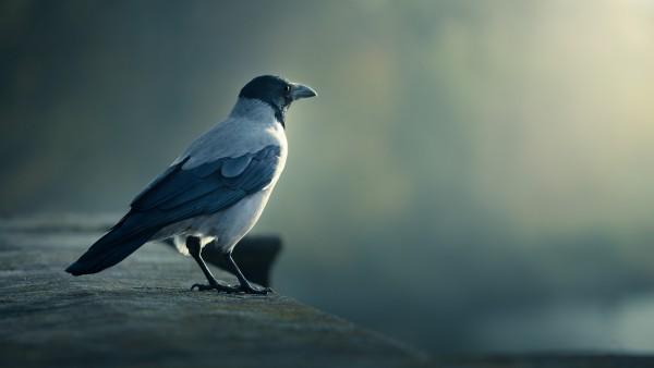 Картинка одинокой птицы которая сидит на бордюре крыши