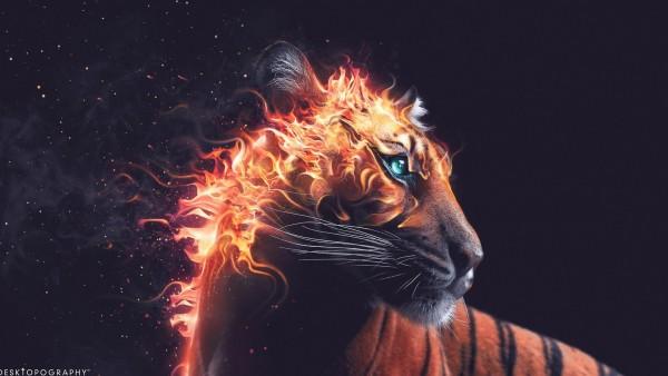 Широкоформатные обои огненного тигра из пламени бесплатно