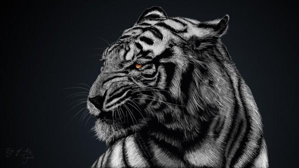 Широкоформатные обои с рисунком тигра