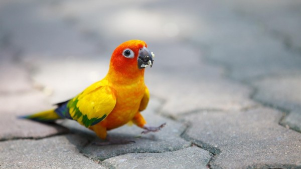 Смешные обои яркого попугая для рабочего стола HD